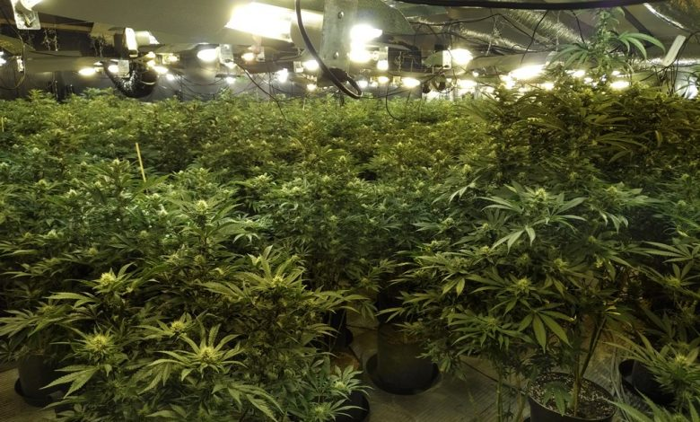 Two arrested after police discover massive cannabis farm in Tameside