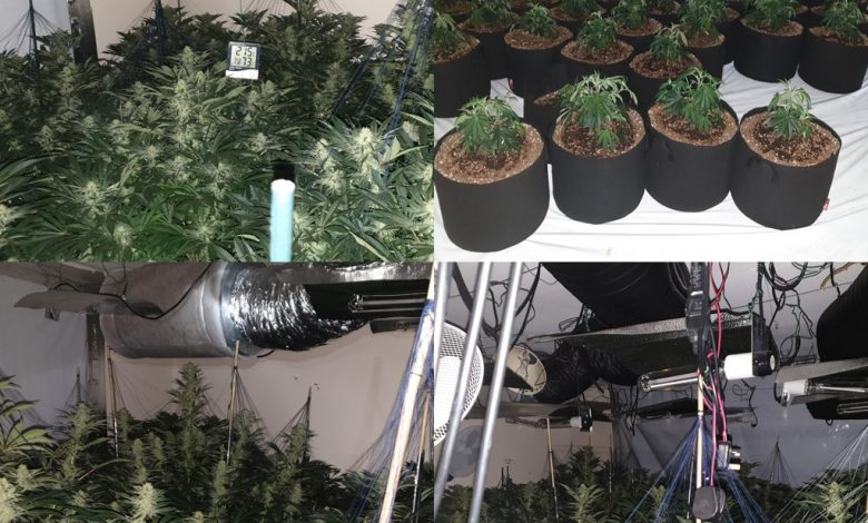 Cannabis farm uncovered in South Manchester